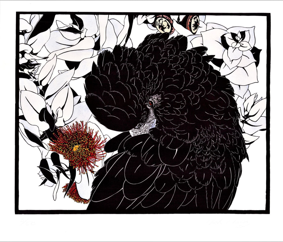Red Tailed Black cockatoo - I've Got My Eye On You - linocut by Vida Pearson